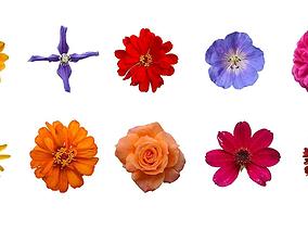 Flower texture 10 pack garden flowers 3D