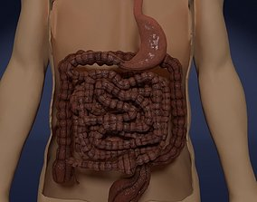 gastric 3D model INTESTINE ANIMATED PERISTALSIS