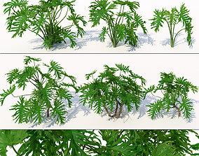 Philodendron leaf 3D model