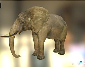 Elephant 3D asset low-poly