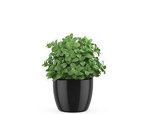 Mint in a pot 3D
