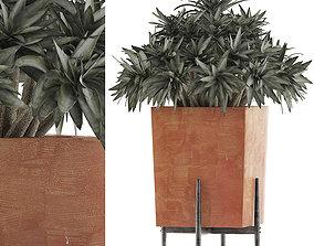 Plants Collection 74 3D model