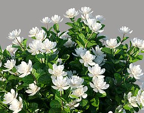 XfrogPlants Gardenia - Gardenia Jasminoides 3D model