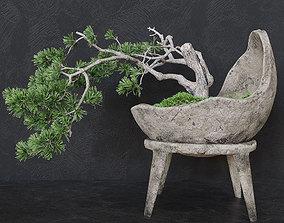3D model Decorative pine tree bonsai