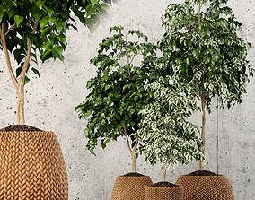 Plants collection 62 3D