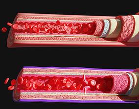 3D model Blood vessels anatomy 4K