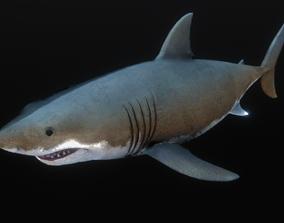 3D asset Jaws White Shark