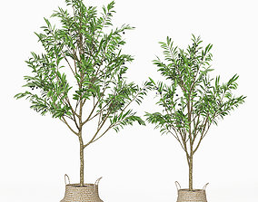 Olive tree 02 3D model