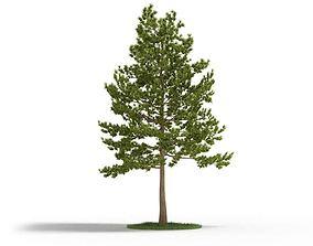 Large Pine Tree 3D model
