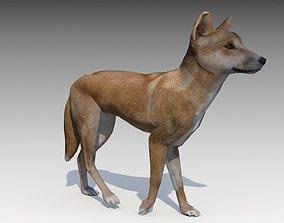 Dingo 3D asset