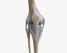 3D asset Knee joint