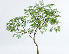 3D Everfresh Tree 3M - Cojoba arborea var angustifolia