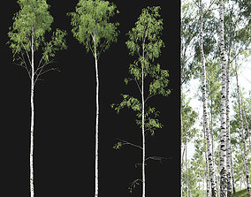 3D model Birch forest part 02