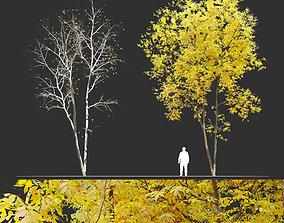 Fraxinus pennsylvanica - Ash tree 3D
