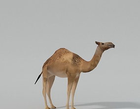 Camel egypt 3D model low-poly