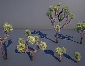 botanical Joshua Tree 3D model game-ready