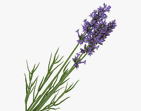 Lavender 3D