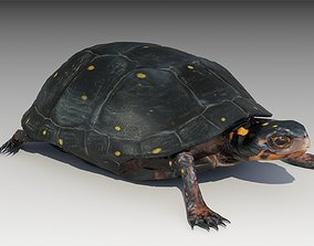 Spotted-turtle 3D asset