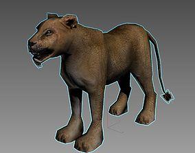 3D asset rigged Lioness