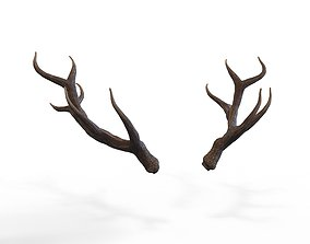 3D asset Deer Horns