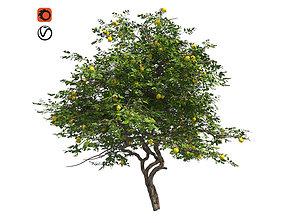 Lemon Fruit Tree 3D asset game-ready