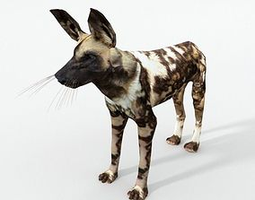 African Hunting Wild Dog 3D asset