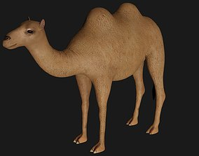 3D model fully rigged low poly camel 3
