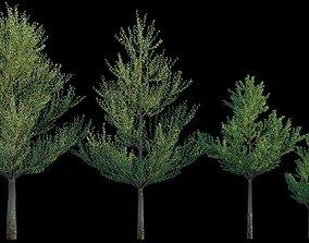 Terminalia Mantaly 3D