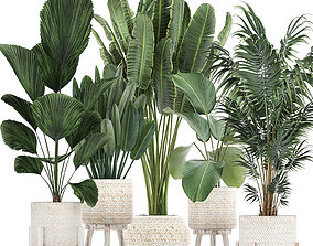 3D model Houseplants in a white basket rattan for the 1