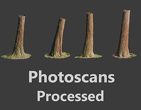 VR / AR ready 4 Redwood Pine Cedar Trunks 3D PhotoScan 1
