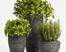 Decorative plant set-68 3D