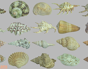 Seashell photoscans 20 pack 3D model