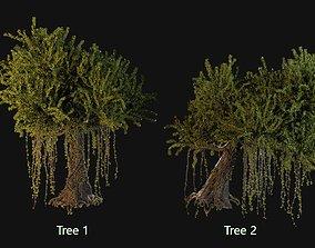 Kapok Trees 3D model