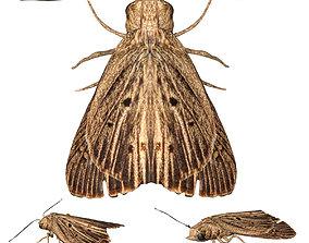 3D model Moth butterfly