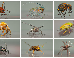 Insect Master Collection 3D asset