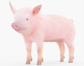 3D model Pig Piglet Rigged with Fur