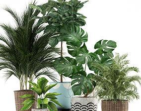 Plants collection 115 3D