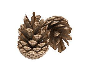 Pine cone 3D