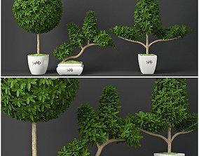3D Houseplant 15