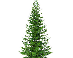 3D model Norway Spruce Picea abies 5m