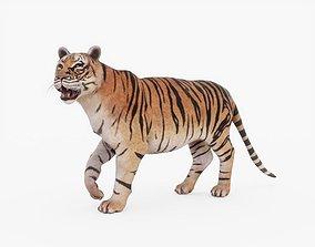 3D model Tiger Rigged Fur