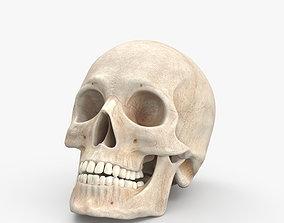 medical 3D model Skull