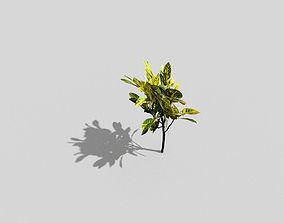 fern Plant 3D asset VR / AR ready