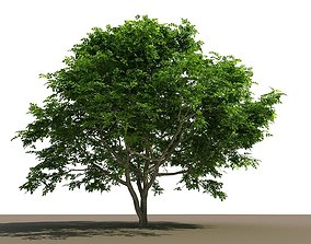 3D Philippine Native Bani Tree