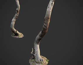 3d scanned nature forest roots 008