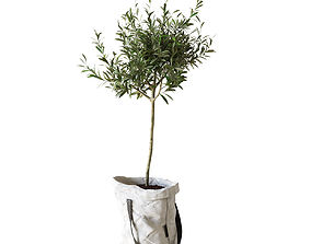 3D Olive tree in bag