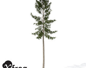 XfrogPlants Norway Spruce 3D model