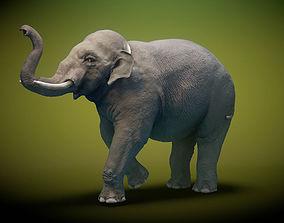 3D model rigged Asian Elephant