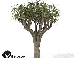 3D model XfrogPlants Tree Aloe