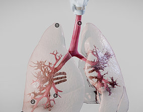 3D Pulmonary System Whole